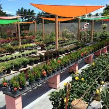 lighthouse garden center 364 photos nurseries gardening 12000 sw 56th st miami fl phone number yelp