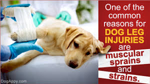 leg injuries in dogs
