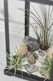 Air Plant Terrarium The Air Plant Terrarium Suburble