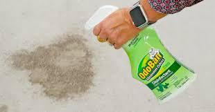 carpet with odoban pet urine remover