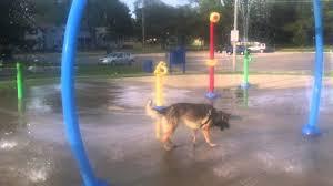 dog in splash pad