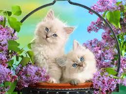 sweet cat love. Interesting Cat Cat Throughout Sweet Love N