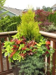 Small Picture 38 best Evergreens in containers images on Pinterest Garden