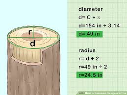 Oak Tree Size Chart 2 Easy Ways To Determine The Age Of A Tree Wikihow