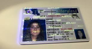 Fake ph Before Buy Ids Prices 05-01-1995 Dob Idbook Maryland-old Id Scannable