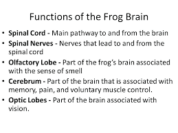 Parts Of A Frog Frog Body Parts Frog Body Parts And Functions Know The Terms In
