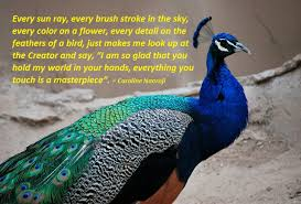 Peacock Beauty Quotes Best of Masterpiece SmileShineLove
