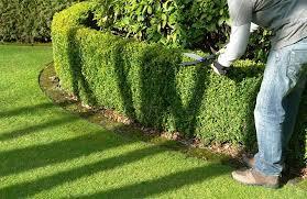 hedge t