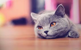 Cute Cat Wallpapers Desktop - Wallpaper ...