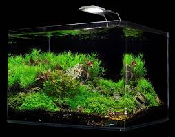 Light Requirement For Planted Aquarium Dennerle Scapers Tank 10 Gallon Aquarium Kit With Led Light