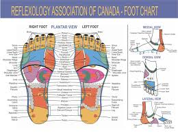 Free Foot Reflexology Charts 35 Free Printables Word Pdf