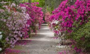 image of magnolia plantation gardens