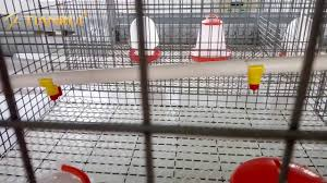 Drinking System How To Use Automatic Nipple Drinking System For Poultry Farming
