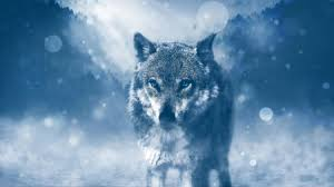 blue wolf background. Simple Wolf Blue Eye Wolf In Background