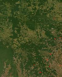 NASA satellite observation of deforestation in the Mato Grosso state of Brazil  The transformation from forest to farm is evident by the paler square shaped     Wikipedia