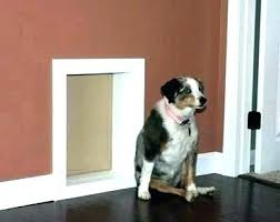 installing doggie door installing doggy door in wall wall entry dog door installing a pet door installing doggie door