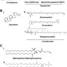 molecular structure of the consuent
