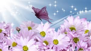 free summer flowers wallpapers hd