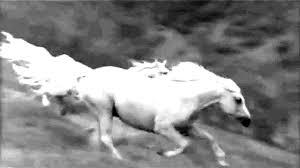 """Résultat de recherche d'images pour """"gifs de chevaux animés"""""""
