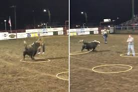 rodeo bull charging. Modren Rodeo ZENITH NEWS  Men Purposefully Let Themselves Get Mown Down By A Charging  Threetonne Inside Rodeo Bull Charging I