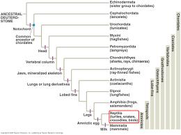 Animal Kingdom Taxonomy Chart Classification