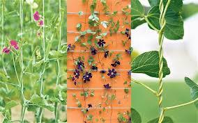 Green Walls In India  Vertical Gardens  Vertical Gardening In Wall Climbing Plants India