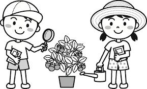 無料イラスト 夏の子供ミニトマトの観察モノクロ