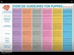 Exercise Guide For Puppies Puppy Schedule Training Your
