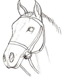 horse head drawing. Fine Head How To Draw A Horse Head Step 5 Intended Head Drawing E
