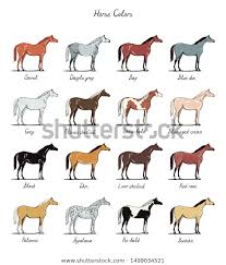 Set Horse Color Chart Breeds Equine Stock Vector Royalty
