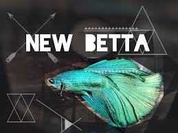 petco betta fish. Plain Petco And Petco Betta Fish B