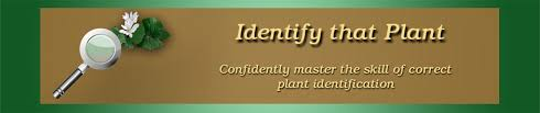 Plant Id Websites Identify That Plant