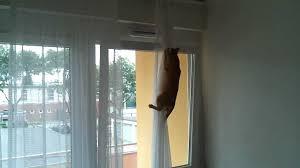 Katze Schleicht Sich Durchs Gekippte Fenster Auf Dem Balkon Crazy