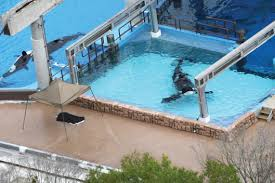 tilikum isolated.  Isolated SEAWORLDDEATH Throughout Tilikum Isolated D