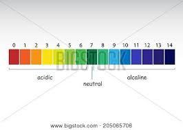 Ph Balance Chart Ph Scale Value Chart Vector Photo Free Trial Bigstock