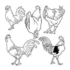 Small Picture Top 10 Free Printable Rooster Coloring Pages Online