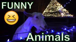 Feeding Funny Animals At Hollywild Santa Village