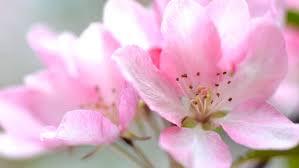 """Résultat de recherche d'images pour """"image fleurs"""""""