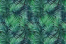 Palm Leaf Pattern Extraordinary 48 Lush Palm Tree Leaves Patterns Psdblast