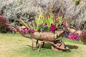 rusted wheelbarrow planter