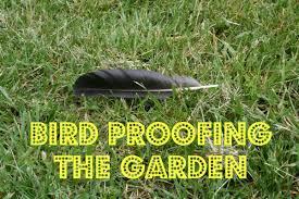how to keep birds away from garden. Keeping Birds Out Of The Garden How To Keep Away From