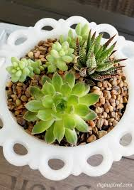 Thrift Store Planter for Succulents