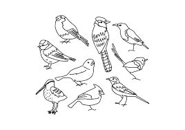 pictures of birds for drawing. Contemporary Birds Birds Drawings For Pictures Of Drawing B