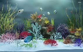 Fish Aquarium Wallpaper 65 Wallpaper Collections