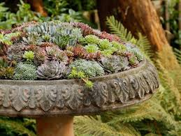 Small Picture Succulent Containers Garden Design
