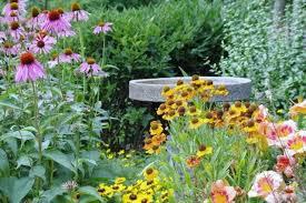 own mini wildflower meadow