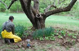 Easy Garden Design Idea Underplanting Trees  TendedUnderplanting Fruit Trees