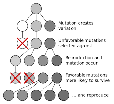 File Mutation And Selection Diagram Svg Wikimedia Commons