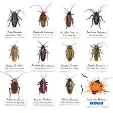 kitchen roaches in kitchen marvelous on how to get rid of small