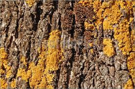доклад на тему грибы паразиты фото